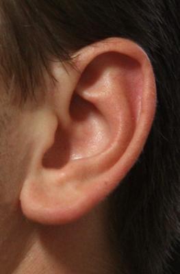 An ear