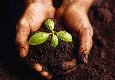 seed2tree2