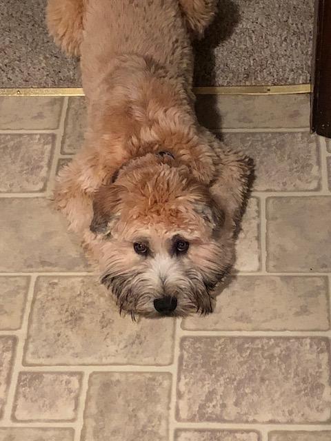 Rosie moping