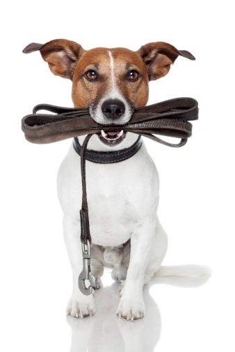 Dog with a leash