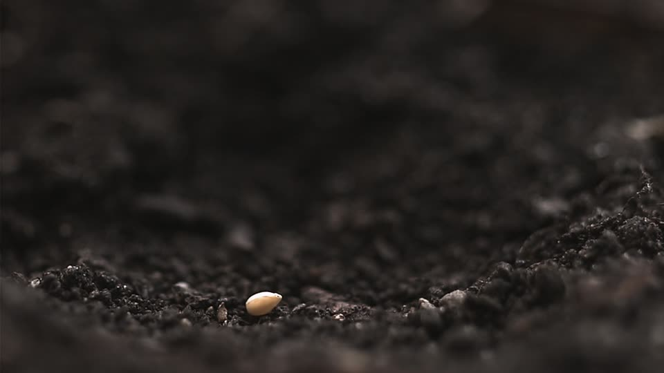 Seed in soil