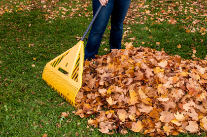 leaf raking