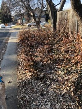 Dead leaves 1
