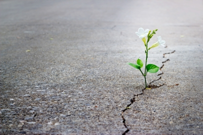 Growing-Flower-in-Concrete